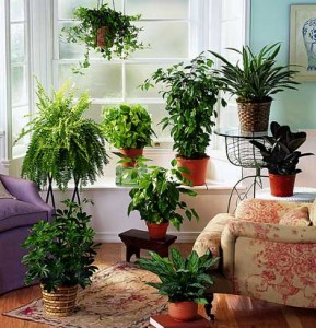 eco-friendly-house-plants-1