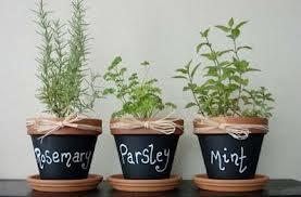 Indoor gardening - How to grow herbs inside