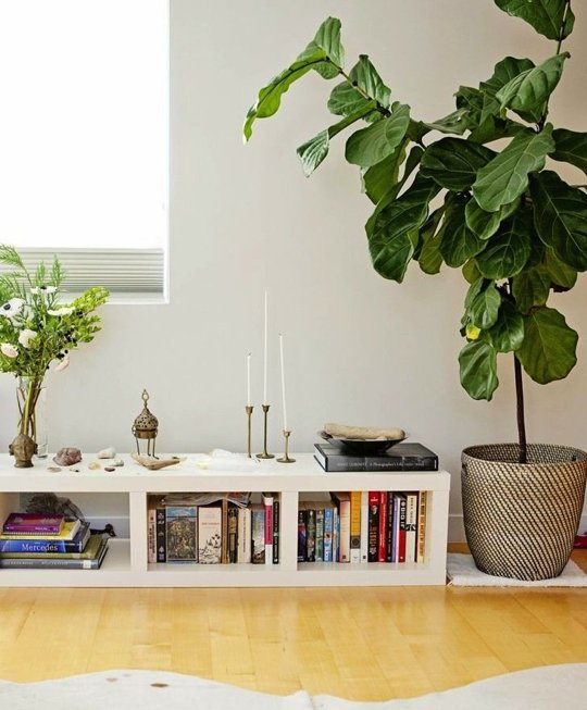 Decorate your interior - the easiest indoor plants to grow in your home