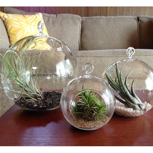 Decorate your home with plants - How to display your plants indoors