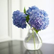 Keep your cut flowers fresh - Tips that really work